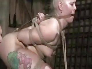 Insex Vid
